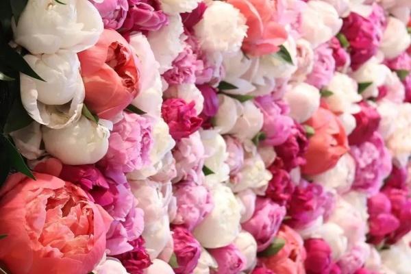 最有气质的花,花苞比鸡蛋还大,1盆顶10盆!