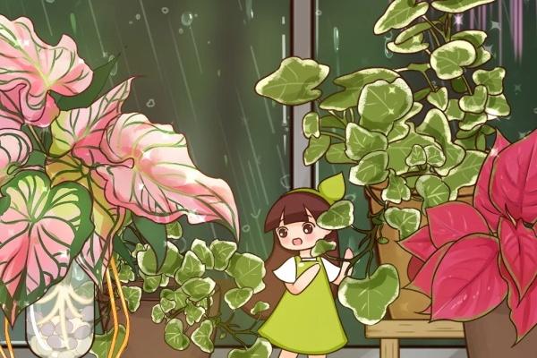 """12种花,堪称""""耐阴王"""",比绿萝好看一万倍!"""