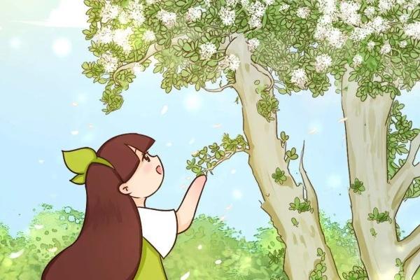 养了20年的玉树,满树开粉花,据说好运要来了!