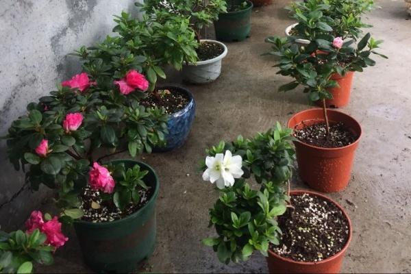 这3种花,下雨天扦插,生根快、不黑杆!