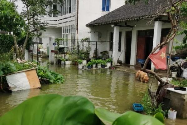 早上起来院子被淹,100盆花,还有救吗?