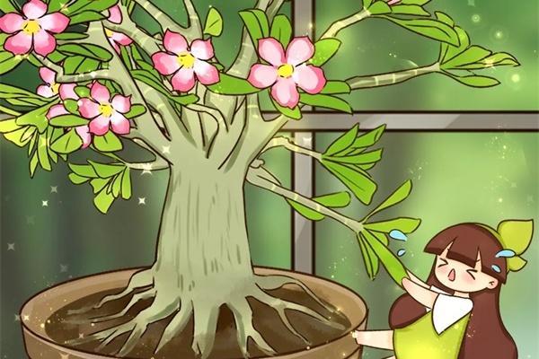 这花就用小盆养,根系拽2下,长成八爪鱼!