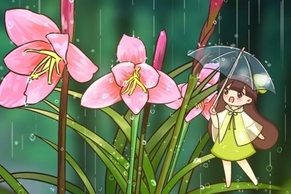 这花就是受虐狂,越下雨越开花,不怕风吹雨打,比白菜长得快!!