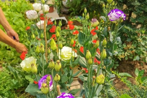 70岁老妈,一天也闲不住,院子里种满了花!