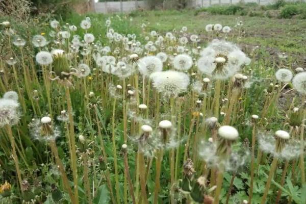 6种花,房前屋后养几棵,开花结果能治病!