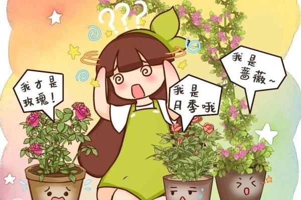 """9种""""冒牌""""花,花市最常见,小心被骗,惹一肚子气!"""