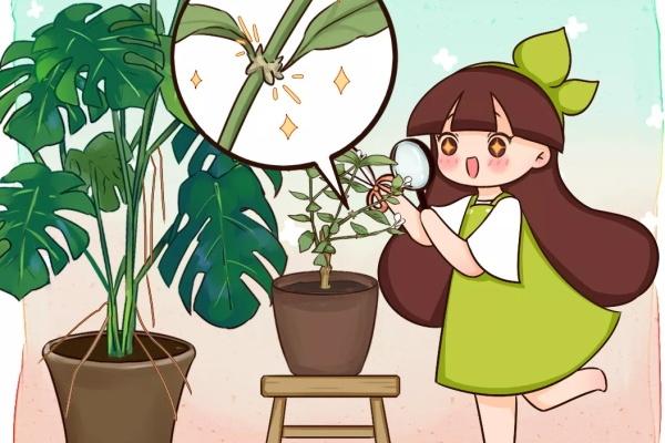 """7种花不用扦插,枝条自带""""生根器"""",沾土就活!"""