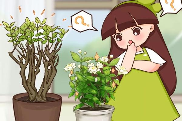 8种花,养小不养老,谁买老桩谁上当!