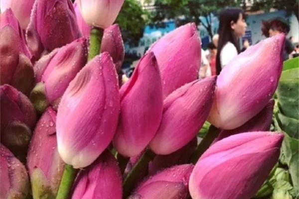 这花全身是宝,叶子蒸鸡格外香,花还能这么吃!