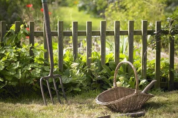 有个院子,不种花、只种菜,这才是生活!