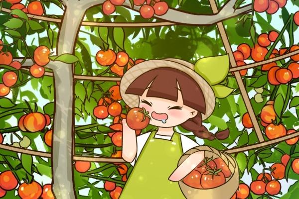 西红柿长成大树,1年结果6000斤,连续能长20年!