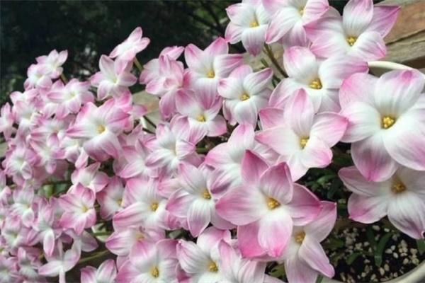 10种花,现在搬出去养,立马长新叶、冒花苞!