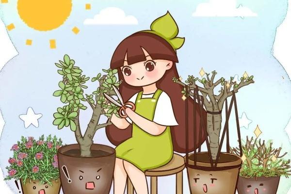 这花不能长太高,一长高就砍1刀,能爆一圈芽!