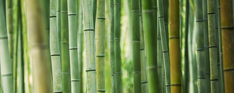 为什么竹子越砍越茂盛