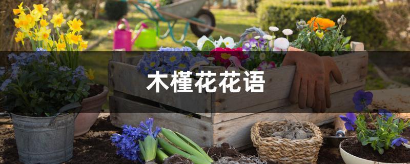 龙骨花的修剪图片_木槿花花语 - 花百科