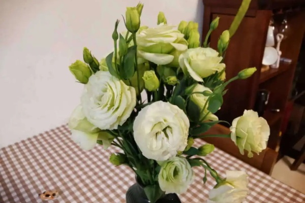 """这种""""玫瑰""""不长刺,气质出众,年年都开花!"""