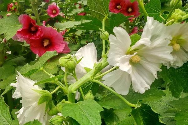 一楼小院养花,邻居全投诉,这么奇葩的理由谁能信?