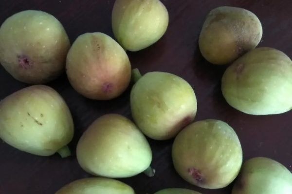 这花结了200个果,1次晒6斤不够吃,放2个月也不坏!