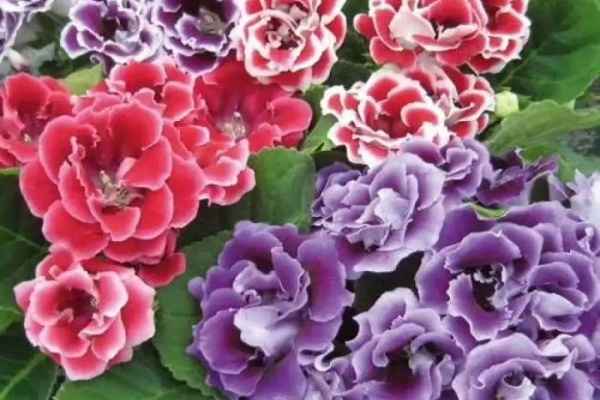 这花也耐阴,四季都开花,比绿萝好看100倍!