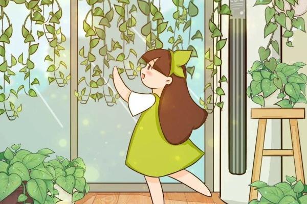 这花爱干净,白醋兑水擦叶子,叶面油亮能反光!