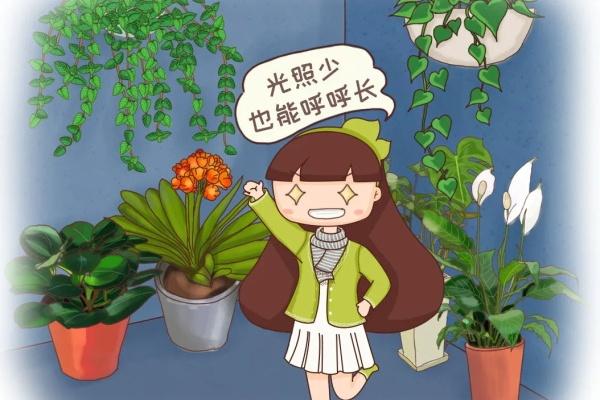 冬天就养耐阴花,没光也能开爆盆,扔角落自己疯长!