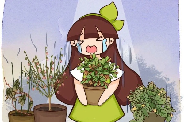 10种花,现在千万别买,养不活浪费钱!