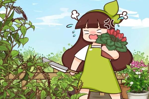 救命!入侵植物爬进院子,3年都杀不完!