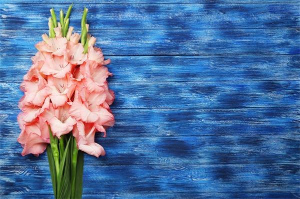 这花竖着长,开花冲房顶,一串串真美!