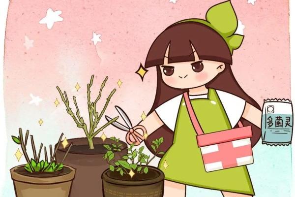 """10种花,冬天""""假死"""",扔了要后悔!"""