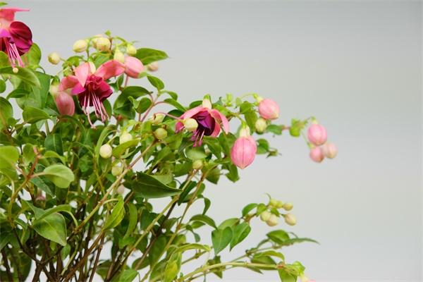 9种耐阴花,适合光照一般家庭,室内养也能开花!