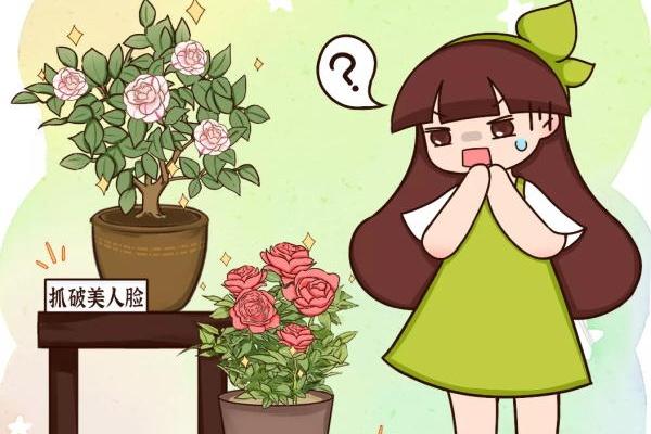 被名字耽误的花,叫起来太难听,开花却很惊艳!