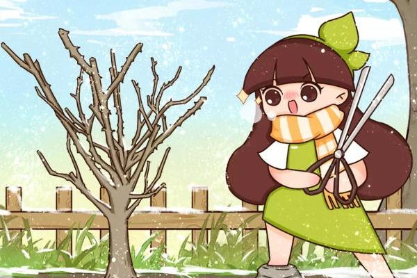 冬剪开始了,这种枝再不剪,明年就是大祸害!