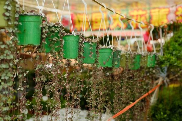 10款耐阴花,半年爬满墙,家里变成绿森林!