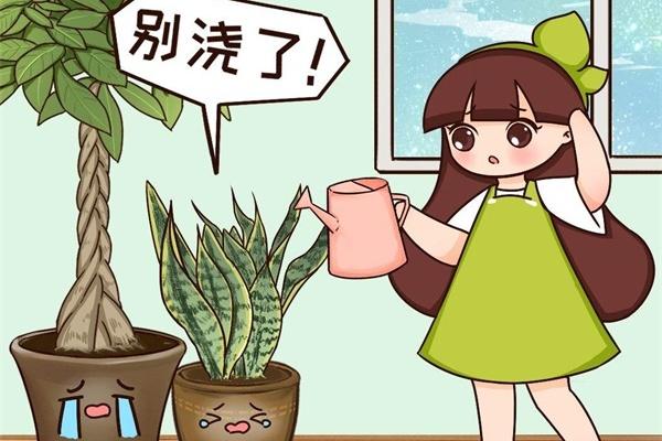不敢用淘米水了,浇完花就死,土里都是虫!