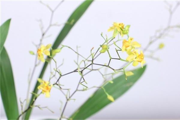 """冬天干燥静电多,养这几盆花,是天然的""""加湿器"""""""