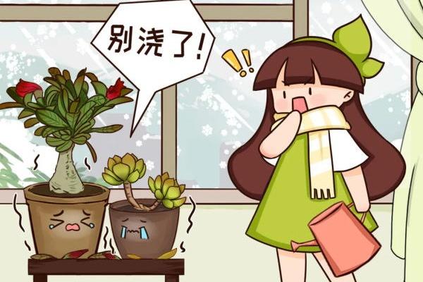 5度以下,这花必须断水,一冬天不浇水也能活