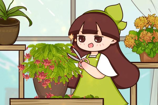 冬天养的花,开完后从这里剪,还能再开几次