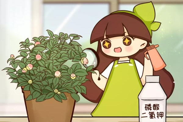 10种花,花芽分化时间,千万别记错了