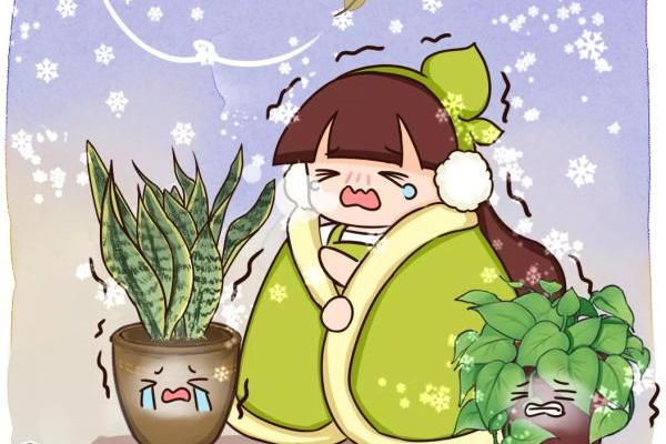 大降温冻哭了,这些花最怕冷,赶紧保护起来~